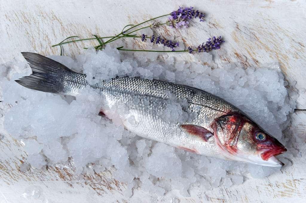 Fresh fisk on ice - food photography