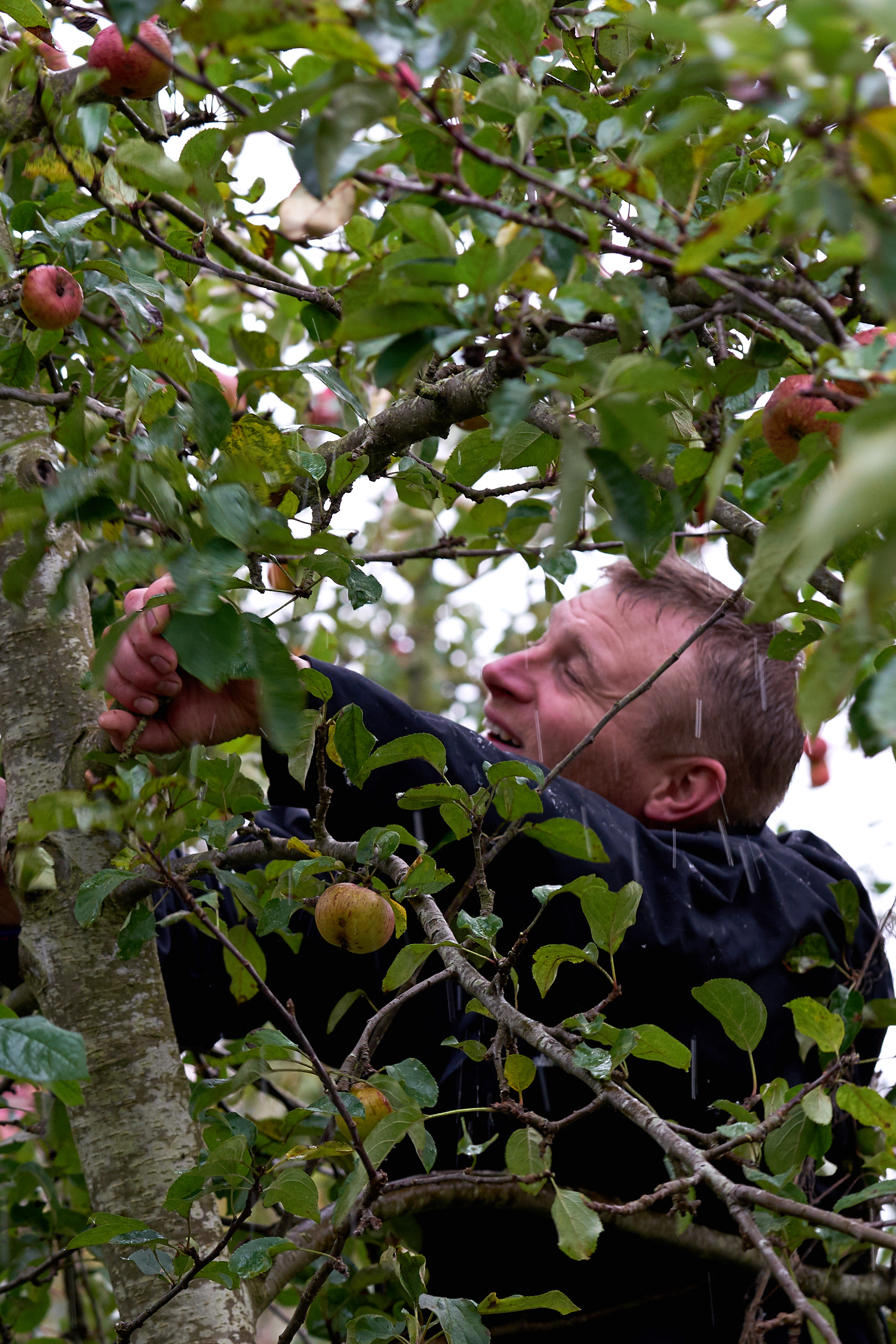 OrchardDSC08562.jpg