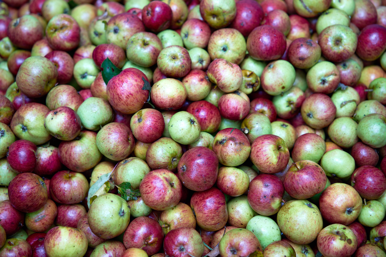 OrchardDSC08733 1.jpg